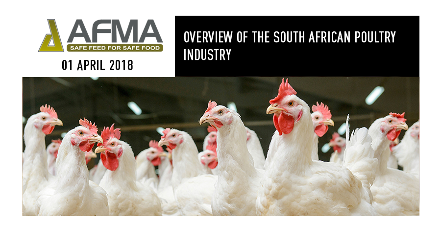 Overview of the South African poultry industry – Fairplay